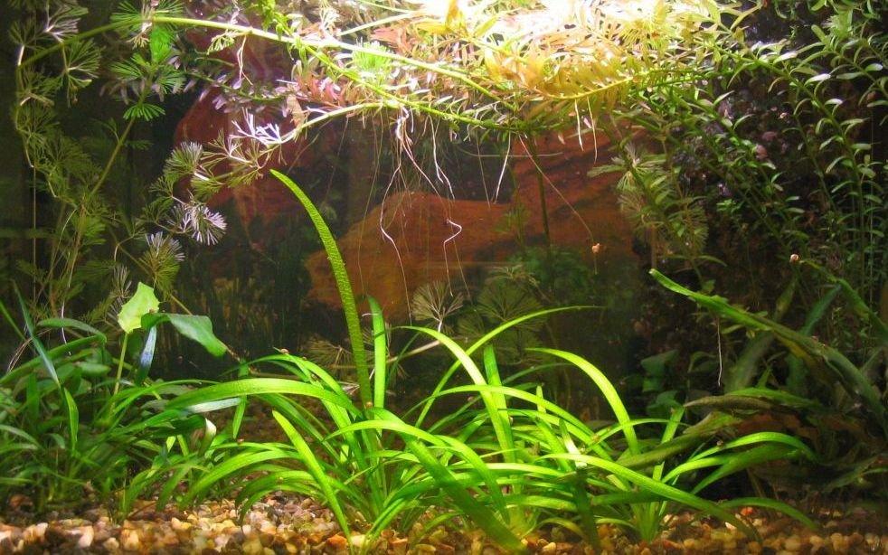 L 39 acquario particolare for Pesci per acquario piccolo